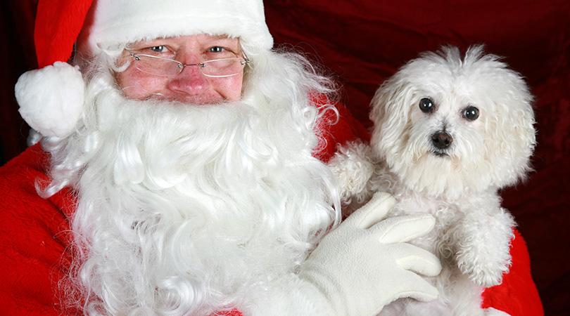 pet with santa shutterstock 65473189