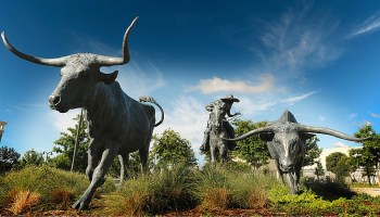 longhorn cattle statues, Plano Texas
