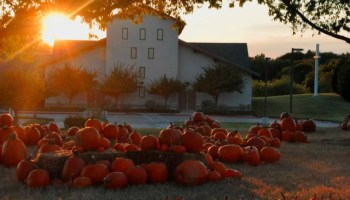 Creekwood Pumpkin Patch