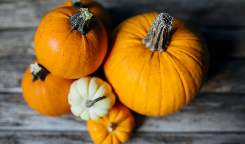 Top 10 Pumpkin plano