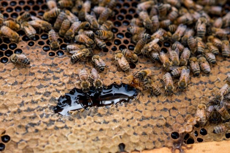 honey-business-desert-creek