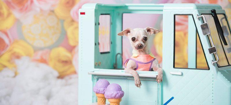Chihuansie, doggie diaper onesie
