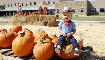 fall festivals plano, collin county, pumpkin patches, frisco