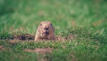Groundhog Day at the Dallas Arboretum