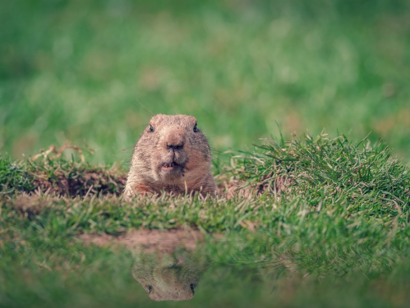Groundhog Day at the Dallas Arboretum