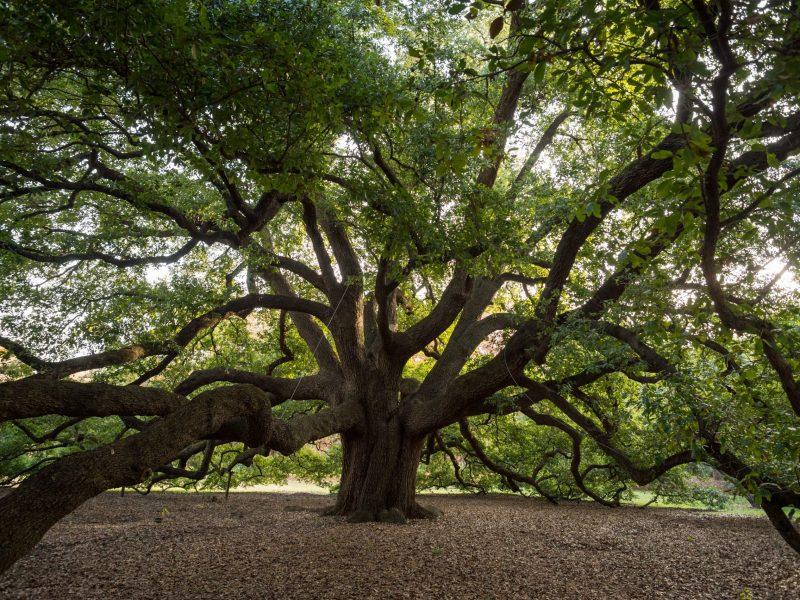 davey tree