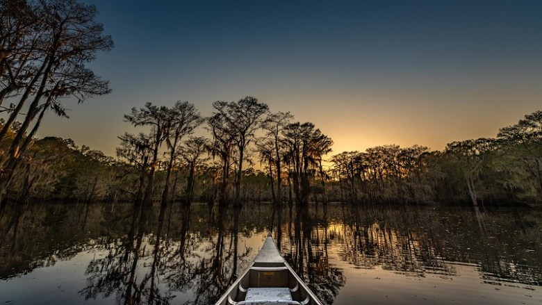 caddo lake in texas. a wild beauty among texas lakes! | photo by david downs