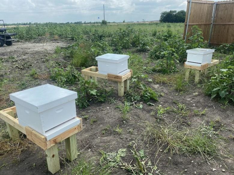 medcitymckinney honeybees 2
