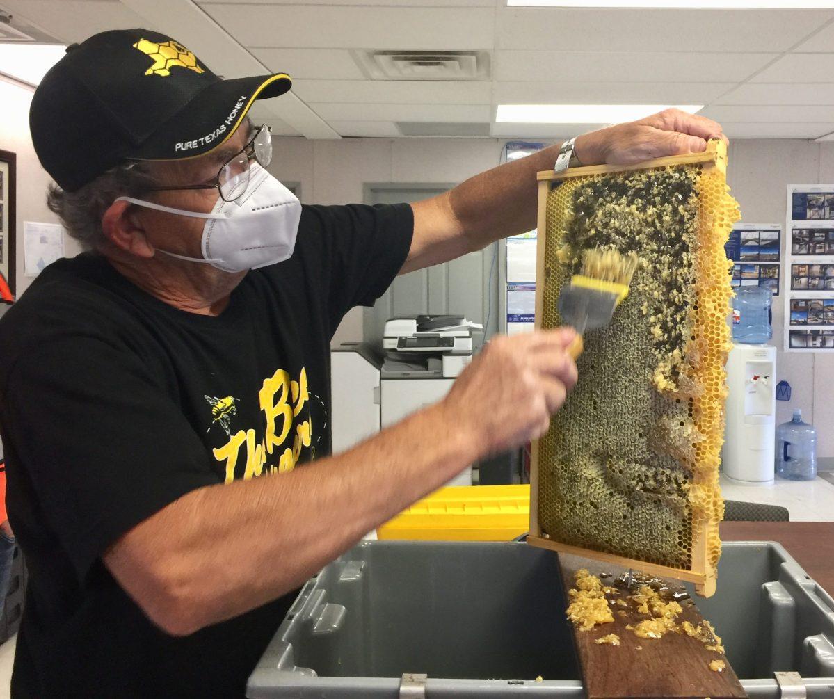 medcitymckinney honeybees 5 scaled