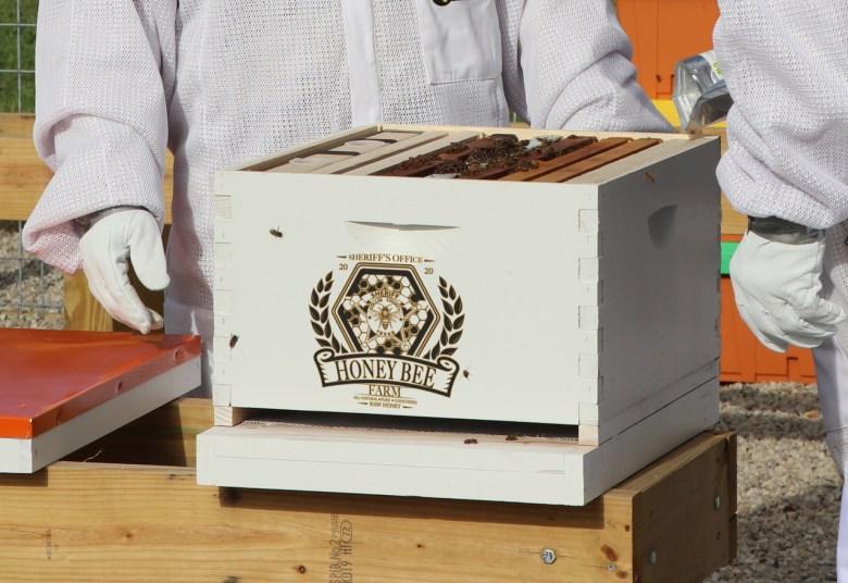 beekeeping texas