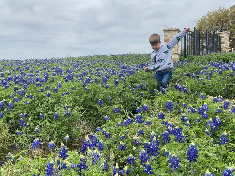 best bluebonnet fields