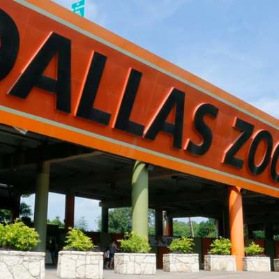 the dallas zoo awaits! learn how to survive the zoo in the summer.