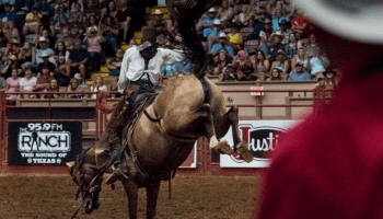 The bucking bronc at the Cowtown Coliseum rodeo in Fort Worth. | Photo by Jordan Jarrett (IG: @jordanjarrettphoto)