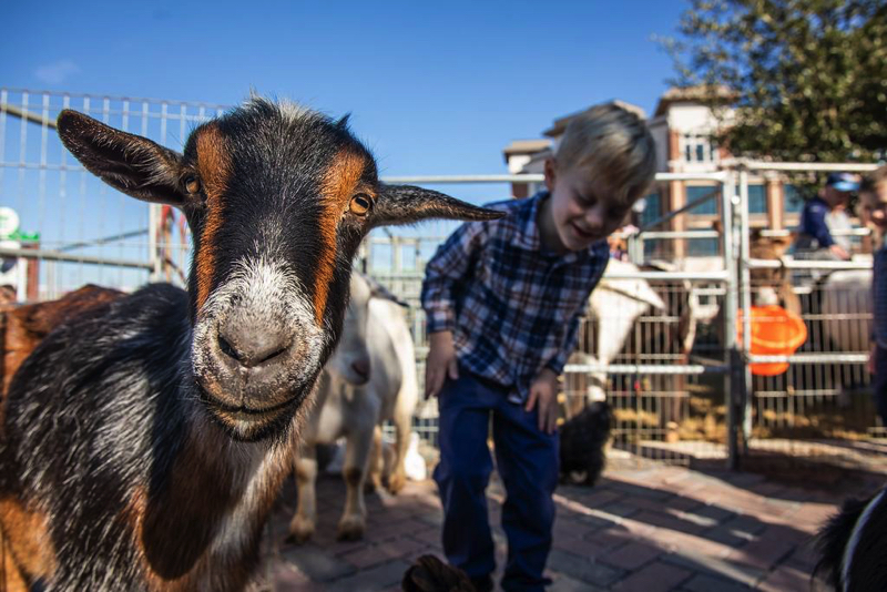 the frisco fresh market petting zoo is a kid-friendly thing to do this weekend! | photo courtesy of frisco fresh market's website