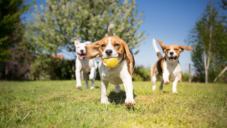 paws in the park is a perfect thing to do this weekend to get your dog moving, and playing with new friends! | shutterstock