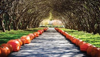 Autumn at the Arboretum is the perfect thing to do this weekend now that it actually feels like fall!