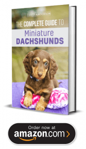 Dachshund Puppies For Sale In Michigan : dachshund, puppies, michigan, Miniature, Dachshund, Puppies, Michigan