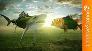 Video : Fish Wars