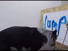 Video: Jumpy the Dog Paints His Name