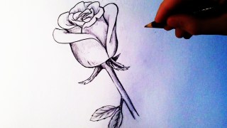 Video: How To Draw a Rose