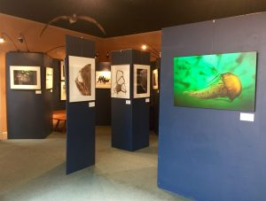 "The Museum of Natural History's exhibit of ""California: At the Water's Edge"", featuring Jason Bradley's nature photography."