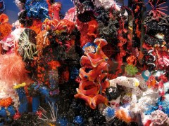 Crochet Coral Reef : Featured Exhibit