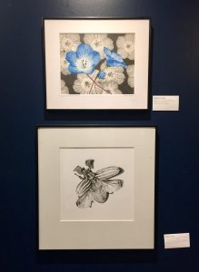 """Baby Blue Eyes"", by Stephanie Rozzo; ""Ten-lined June Beetle"", by Mattais Lanas."