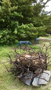 """The Raven and the Wolf"", by Sharon Loper. Bronze, redwood, slate, other organic materials."