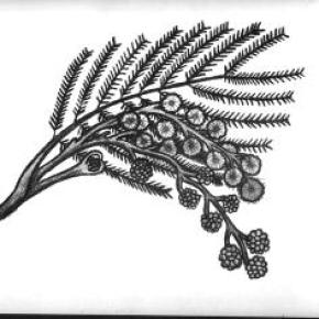 Lee Maverick - Botanical Drawing