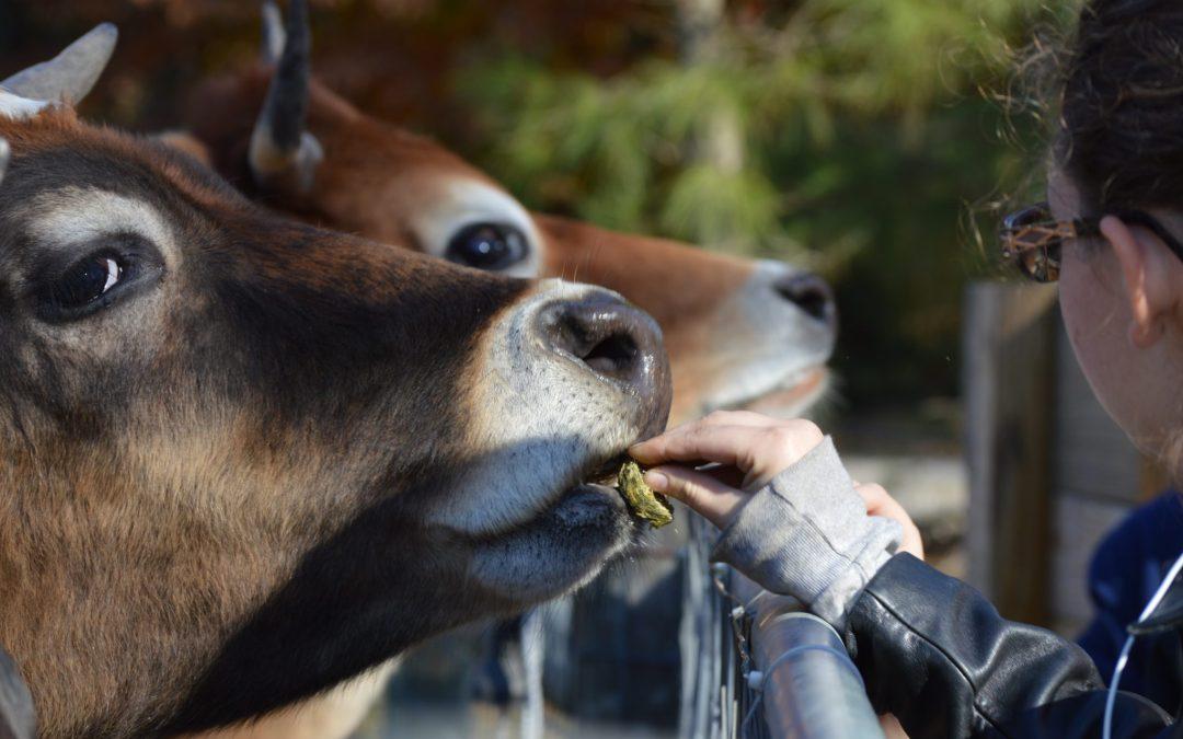 Goochland Gazette – Local Farm School Making Move to Charles City