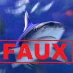 Grève à La Réunion: NON, les requins ne sont pas en grève! Alerte FAKE NEWS!