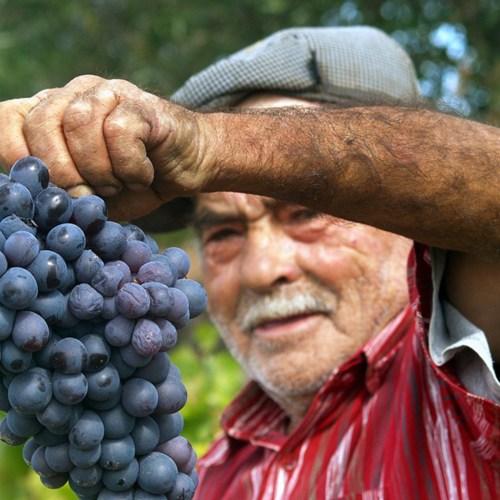 vino portugal