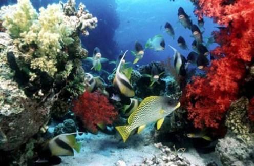 corales - Cayo Largo, Cuba.jpg
