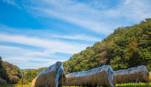 【野山北・六道山公園】トレイルランに最適!フォトウォークよりフォトレッキングな撮影スポット!