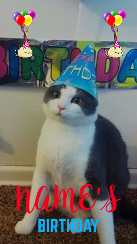 cat balloons pet birthday
