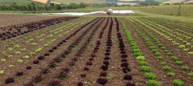 Growers – Padstow Kitchen Garden