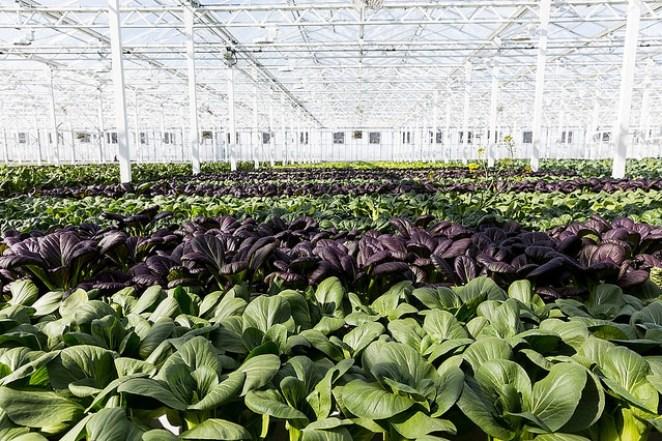 sustainable food, hydroponics