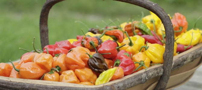 Turning up the heat: South Devon Chilli Farm