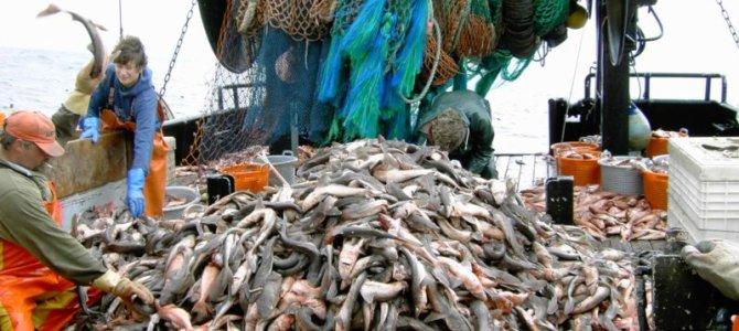 Abundant fish need cool seas and protection