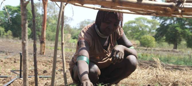 In Ethiopia, climate change leads herders to retrain as farmers