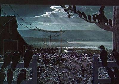 gli uccelli scena film