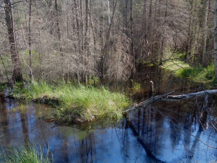 Wetlands border the CPR tracks in many areas