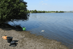 Collecting ostracods