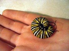 monarch-larvae