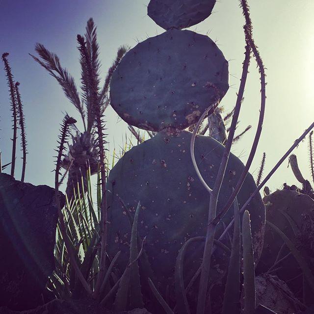 Snowman. Gran Canaria #style #snowman #cactus