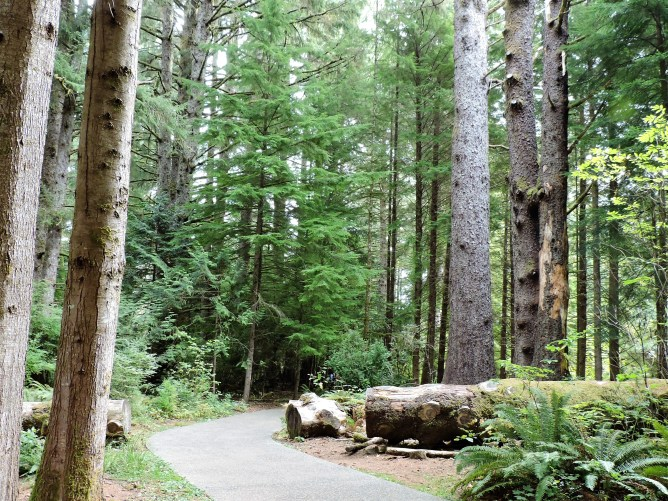 One of the trails through Fort Clatsop