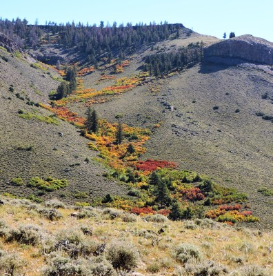 A cascade of fall colors on the Dillon Pinnacles trail