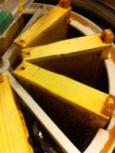 honey- Frames in Hive Box