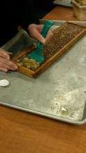 honey- Single Frame and Wax Cappings