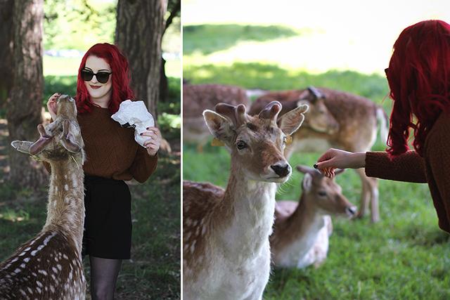 Rencontre avec les petites biches de Phoenix Park à Dublin